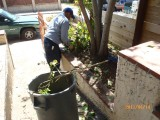 during junk removal Alhambra